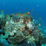 Отели Хургады с хорошим коралловым рифом