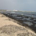 Отели без водорослей и медуз на пляжах Туниса